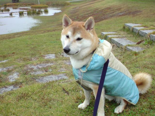 f:id:maki-mama:20091111083209j:image:w300