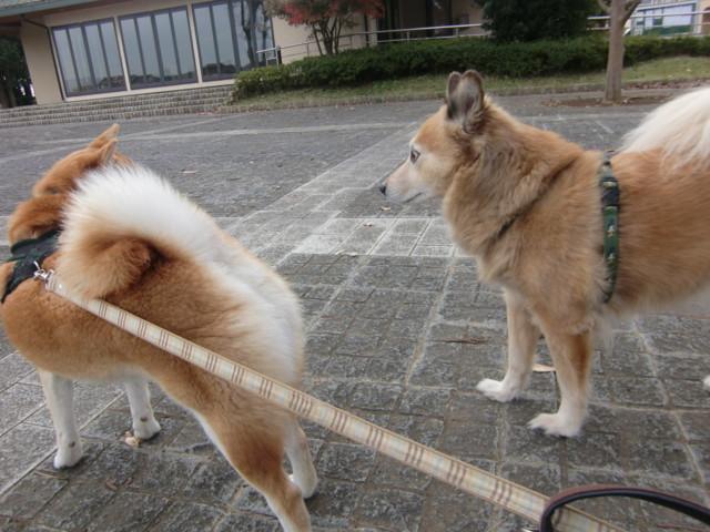 f:id:maki-mama:20091116132938j:image:w300