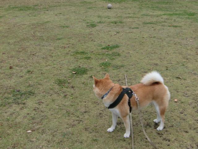 f:id:maki-mama:20091117194459j:image:w300
