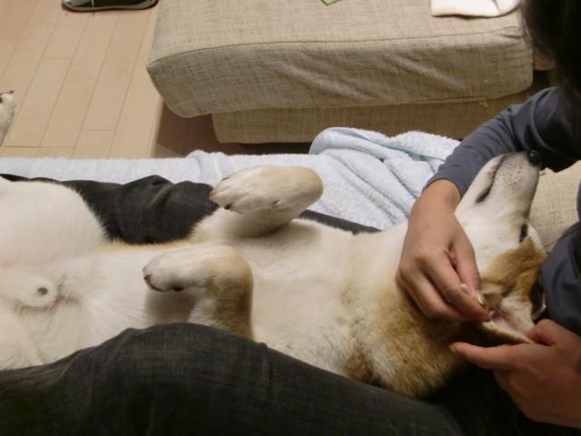 f:id:maki-mama:20091124143924j:image:w300