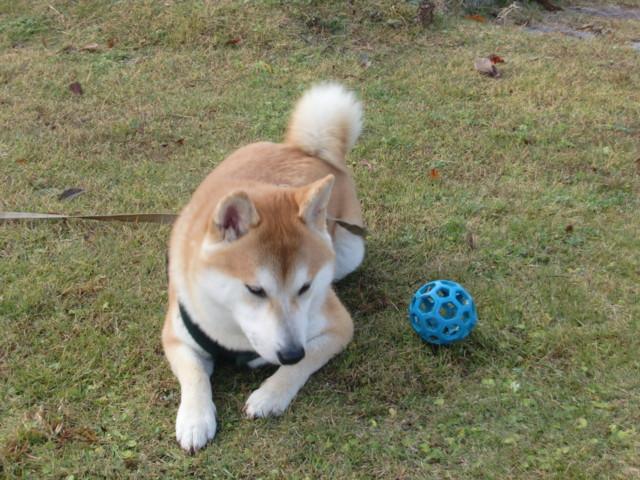 f:id:maki-mama:20091128221732j:image:w300