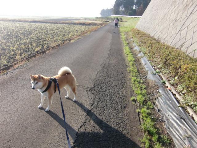 f:id:maki-mama:20091201211622j:image:w300
