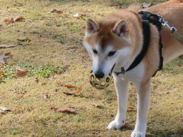 f:id:maki-mama:20091204145719j:image:w300