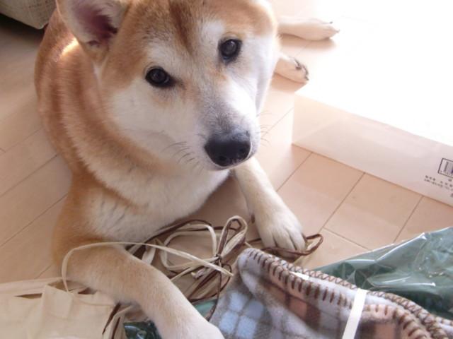 f:id:maki-mama:20091208133600j:image:w300