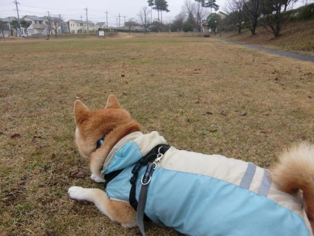 f:id:maki-mama:20091211142521j:image:w300