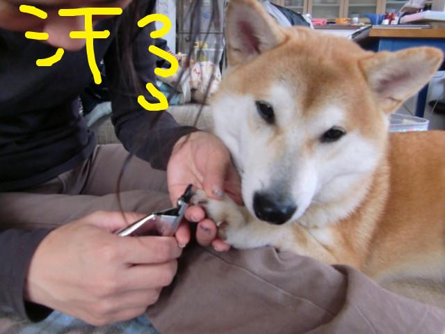 f:id:maki-mama:20091212145143j:image:w300