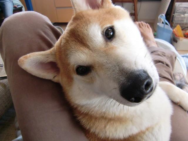 f:id:maki-mama:20091212145150j:image:w300