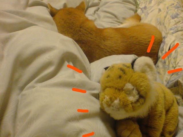 f:id:maki-mama:20091217062813j:image:w300