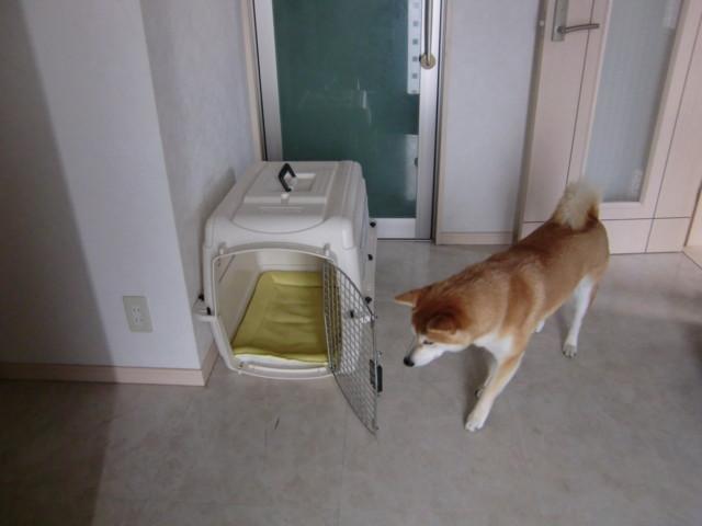 f:id:maki-mama:20091217124852j:image:w300