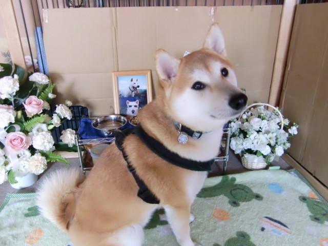 f:id:maki-mama:20091219154049j:image:w300