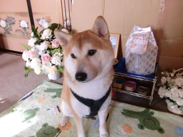 f:id:maki-mama:20091219154050j:image:w300