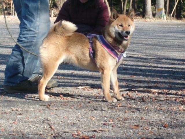f:id:maki-mama:20091219154052j:image:w300
