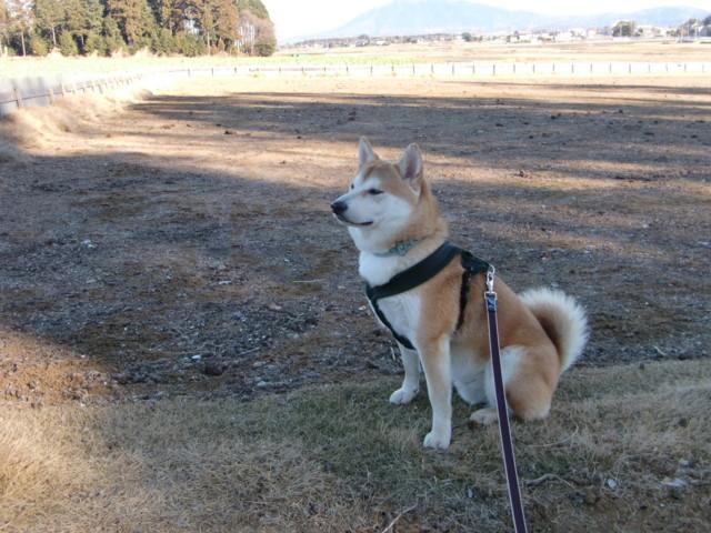 f:id:maki-mama:20100101171853j:image:w300