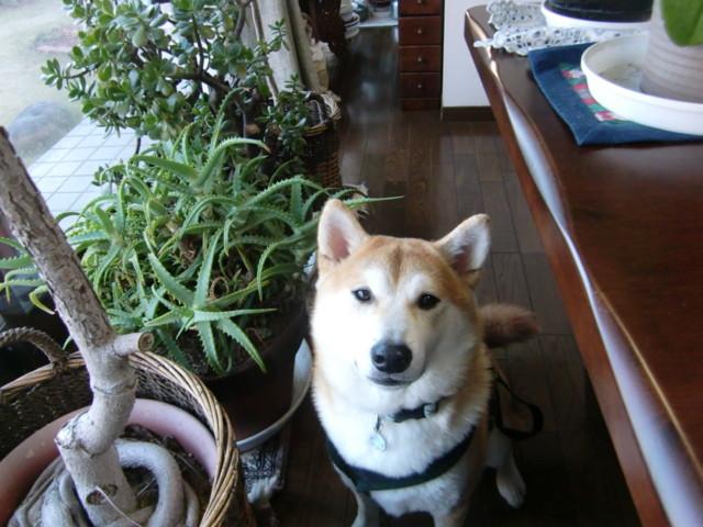 f:id:maki-mama:20100101171855j:image:w300