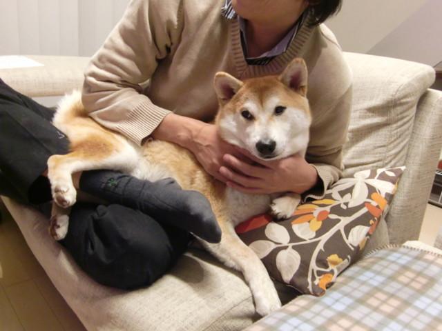 f:id:maki-mama:20100102204825j:image:w300