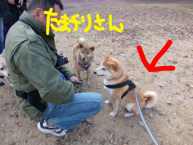 f:id:maki-mama:20100104175251j:image:w300