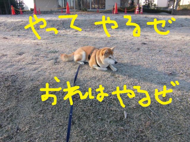 f:id:maki-mama:20100106232816j:image:w300
