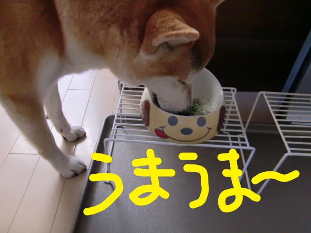 f:id:maki-mama:20100107152412j:image:w300
