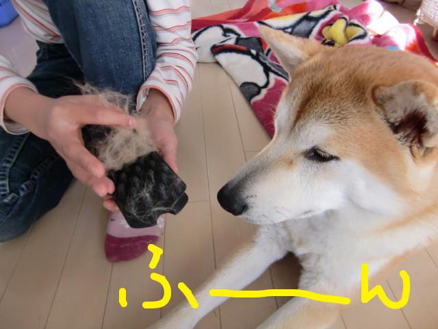 f:id:maki-mama:20100116133132j:image:w300