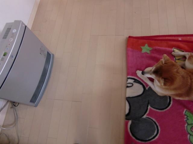 f:id:maki-mama:20100125113529j:image:w300