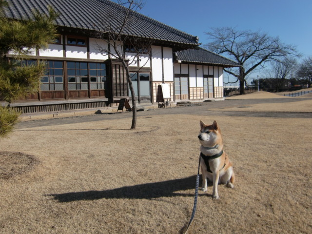 f:id:maki-mama:20100126130301j:image:w300