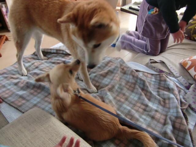 f:id:maki-mama:20100128100903j:image:w300