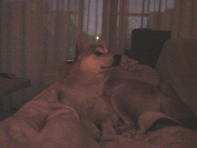 f:id:maki-mama:20100206224416j:image:w300
