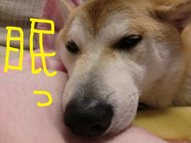 f:id:maki-mama:20100213140851j:image:w300