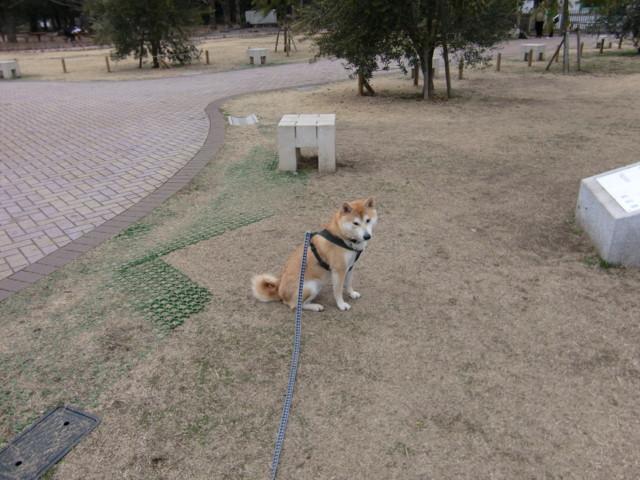 f:id:maki-mama:20100218172612j:image:w300