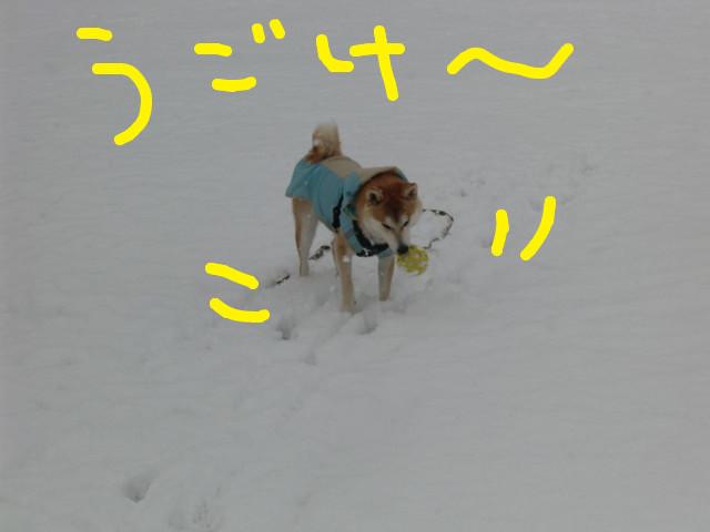 f:id:maki-mama:20100219174616j:image:w300