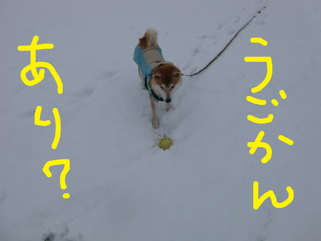 f:id:maki-mama:20100219174620j:image:w300