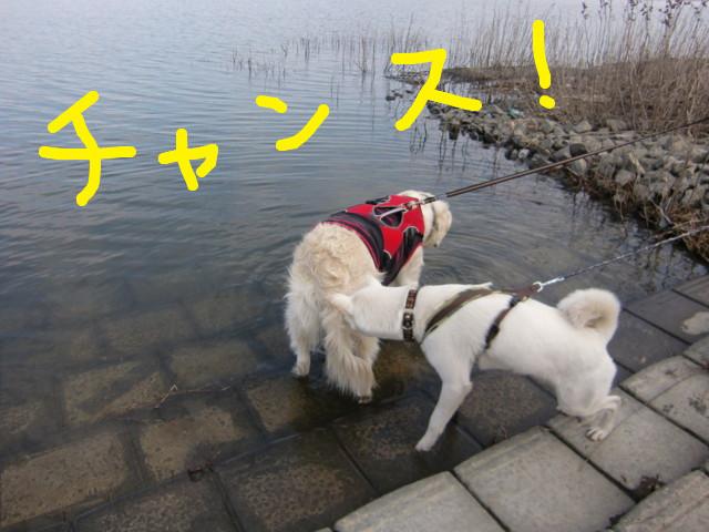 f:id:maki-mama:20100221190650j:image:w300