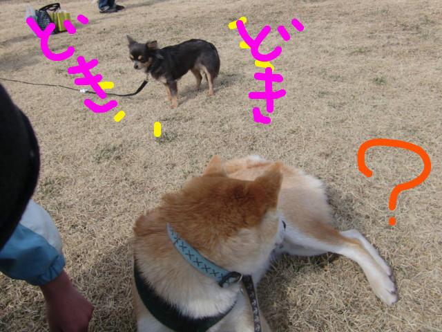 f:id:maki-mama:20100221192021j:image:w300