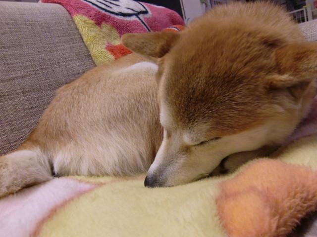 f:id:maki-mama:20100223152918j:image:w300