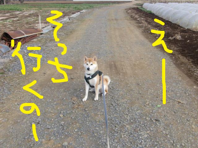 f:id:maki-mama:20100224131844j:image:w300
