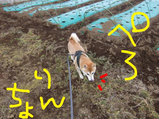 f:id:maki-mama:20100224131847j:image:w300