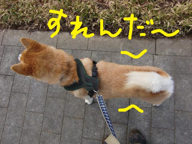 f:id:maki-mama:20100225113955j:image:w300