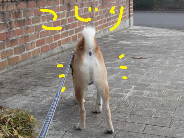 f:id:maki-mama:20100225113957j:image:w300