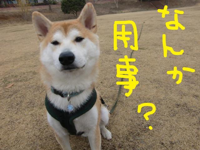 f:id:maki-mama:20100226101951j:image:w300