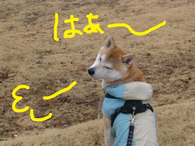 f:id:maki-mama:20100228210550j:image:w300