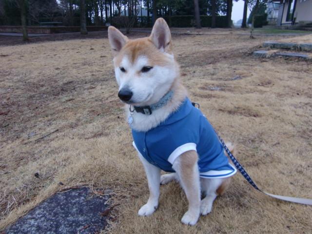 f:id:maki-mama:20100301204059j:image:w300