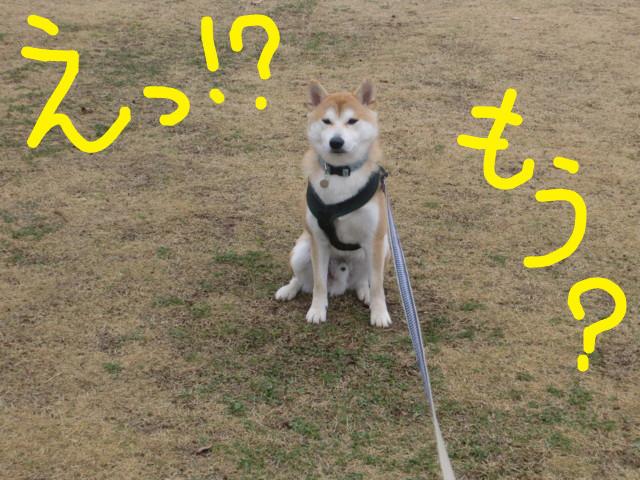 f:id:maki-mama:20100302110406j:image:w300