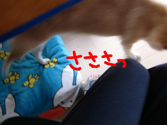 f:id:maki-mama:20100303110838j:image:w300