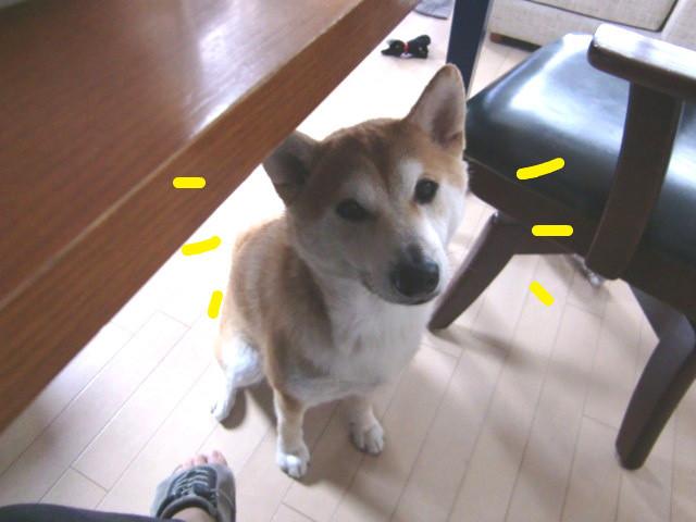 f:id:maki-mama:20100303110839j:image:w300