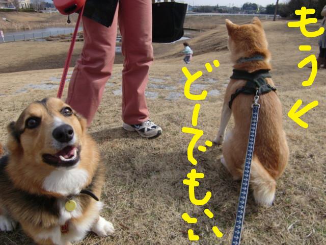 f:id:maki-mama:20100304122420j:image:w300