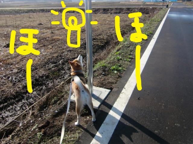 f:id:maki-mama:20100305095741j:image:w300