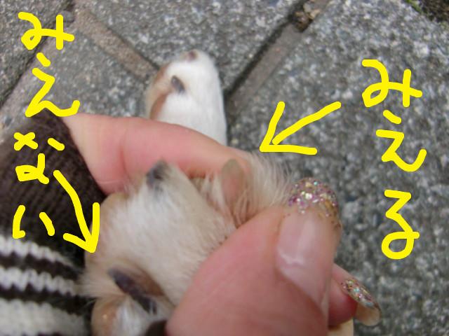 f:id:maki-mama:20100306121911j:image:w300