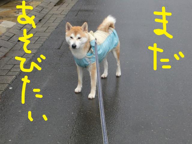 f:id:maki-mama:20100307120243j:image:w300