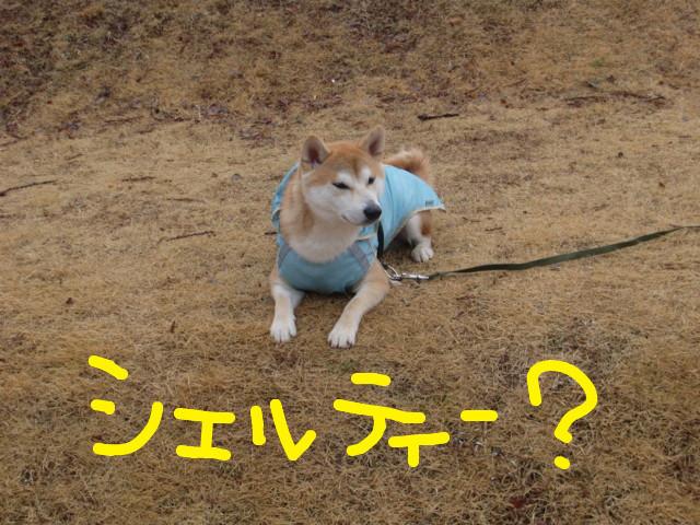 f:id:maki-mama:20100307122412j:image:w300