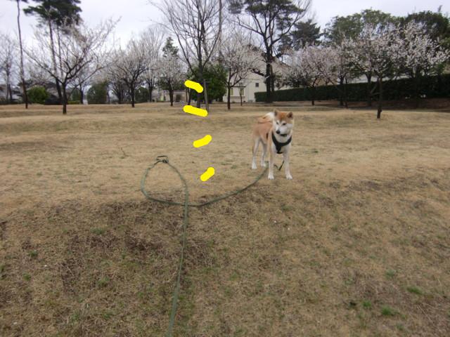 f:id:maki-mama:20100310154130j:image:w300